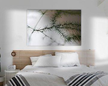 Mimosa van Erik Reijnders