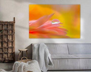 Druppel op een roze bloem von Jenco van Zalk