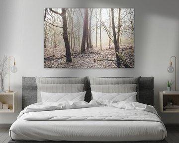 bos in mistige ochtend van Lavieren Photography