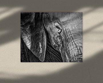 Schwarzes weißes Close Up des Elefanten im wilden von Heleen van de Ven