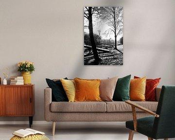 Der Haager Wald von Aukelien Philips