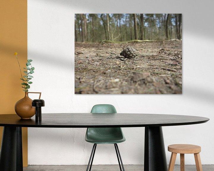 Sfeerimpressie: dennenappel op een bospad van timon snoep