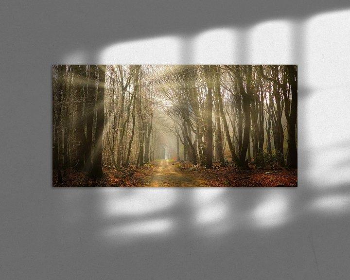 Sfeerimpressie: Gouden uur in het Speulderbos van Sander Strijdhorst