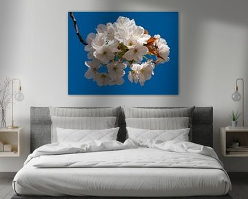 Witte bloem op blauwe lucht van Sabrina Geerling