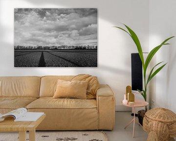 Weite Aussicht auf die Landschaft. Schwarz-Weiß-Ansicht der Wiese. Mit langem Schatten der Bäume. von Lieke van Grinsven van Aarle