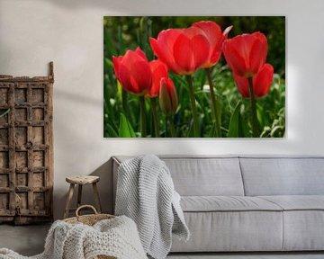 Tulpen von Hans Heemsbergen