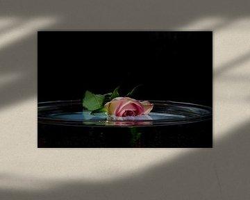 Treurroos te water van Ellinor Creation