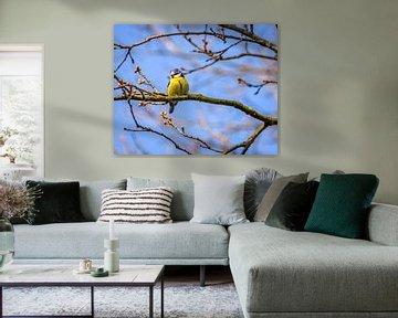 Blaumeise auf einem Zweig von Patrick Herzberg