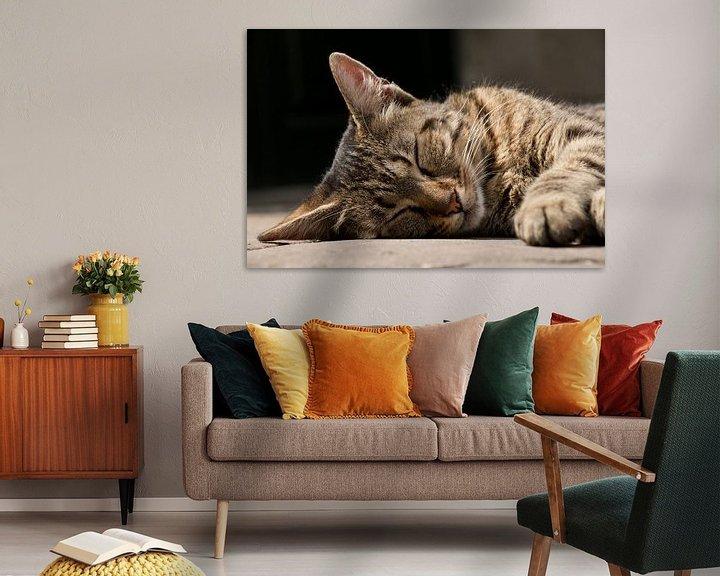 Beispiel: Schlafende streunende Katze von Aukelien Philips
