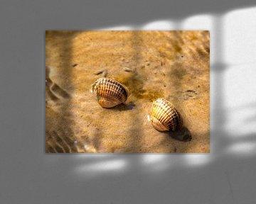 Shells in the Wadden Sea van Alexander Wolff