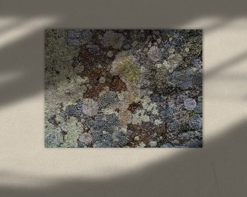 Korstmossen op oude muur von Lies van den Berg