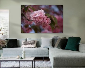 Roze bloesem von Roberto Zea Groenland-Vogels