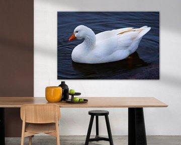 Witte eend von Christiaan Klompstra