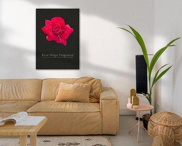 Rose Duftzauber von Leopold Brix