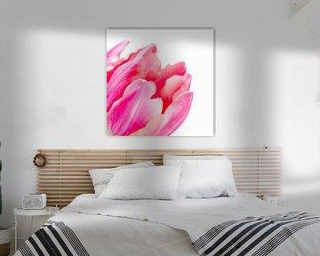 Detail van een fel roze tulp met lichte achtergrond van Judith Spanbroek-van den Broek