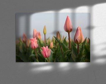 Roze tulpen von Monique Hassink