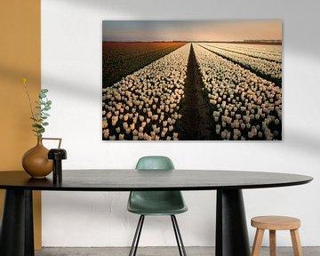 Holländischer Tulpe-Sonnenuntergang von Claire Droppert