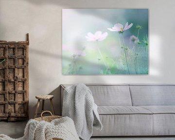 Bloemenveld van Anouschka Hendriks