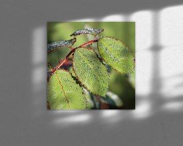 Grüne Blätter mit Tautropfen