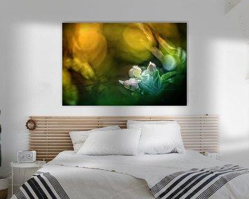 Farbenfrohe Apfelblüten von Nicc Koch