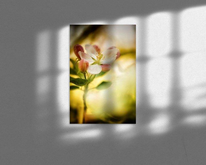 Beispiel: Apfelblüte in der frühen Morgensonne von Nicc Koch