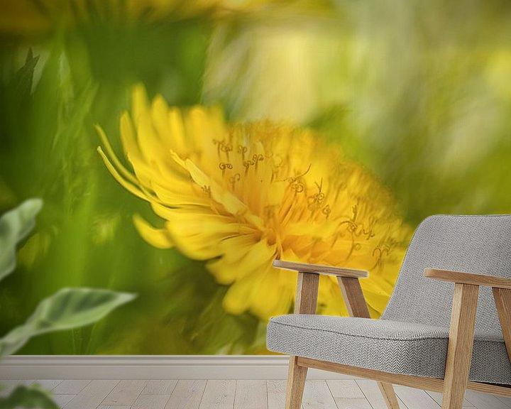 Beispiel fototapete: Löwenzahnblüten in der Frühlingssonne von Nicc Koch