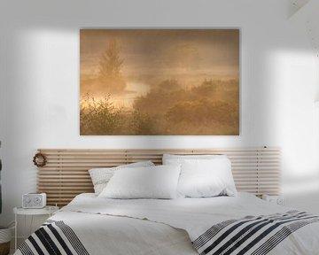 Prachtige mistige ochtend op de Stijbeekse Heide met mooi gouden licht van Jos Pannekoek