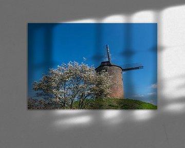 Blüte und eine Mühle von Patrick Verhoef