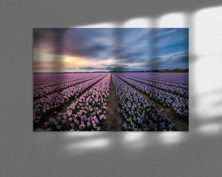 Beispiel: Nature's perfume the amazing Hyacinths von Costas Ganasos