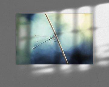 Libelle mit Bokeh von Kristof Ven
