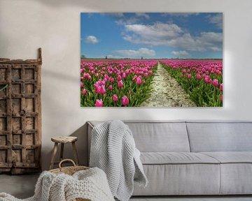 Holländisches Tulpenfeld von Ilya Korzelius