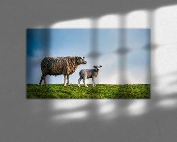 Moeder met dochter - lammetjes op Texel van Texel360Fotografie Richard Heerschap
