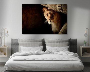 Lion in hiding