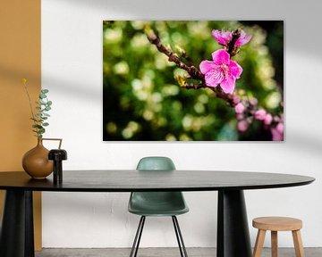 Purple Flower von Geert Huberts