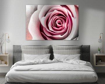 Rose Art von Geert Huberts