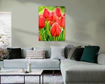 Tulipe avec une goutte d'eau
