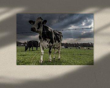 Kühe Landschaft. von Anjo ten Kate
