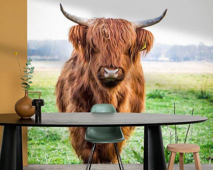 Beispiel fototapete: der schottische Hochländer von Anjo ten Kate