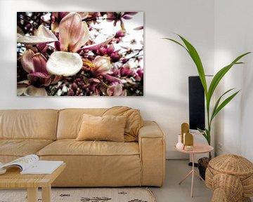 Magie van magnolia van Christine Nöhmeier