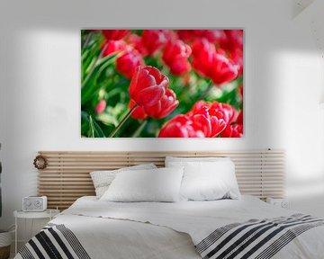 Blühende rote und rosa Tulpen während eines schönen Frühlingstages von Sjoerd van der Wal