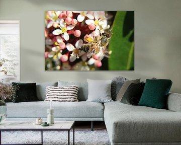 Honingbij bestuift de bloemen in de stuik von Anja Ruiter