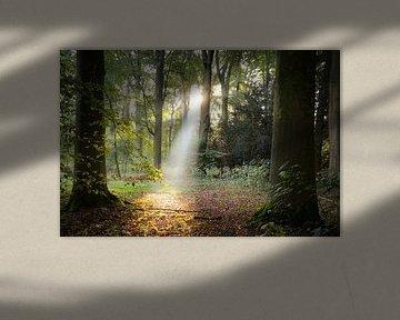 Zonnestraal schijnt door het bos van Amelisweerd sur Arthur Puls Photography