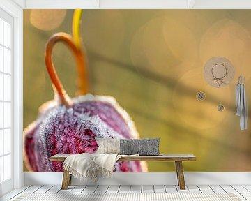 Kievitsbloem met rijp van Erik Veldkamp