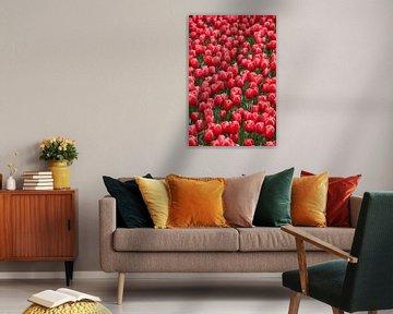 Feld mit roten Tulpen von Ad Jekel