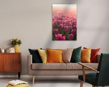 Tulpenveld van AdV Photography