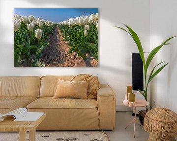 Tulpen auf holländische Weise von Arisca van 't Hof