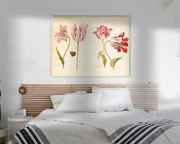 Tulpen, Jacob Marrell