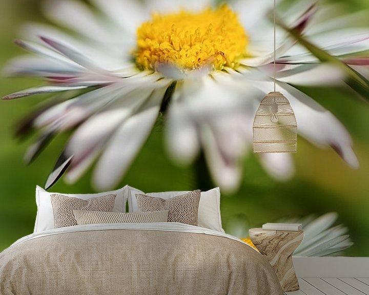 Beispiel fototapete: Gänseblümchen in der Frühlingssonne von Nicc Koch