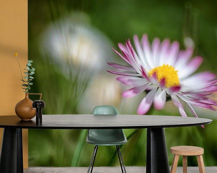 Beispiel fototapete: Gänseblümchen im dunkeln Rasen von Nicc Koch
