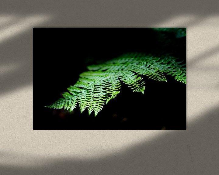 Sfeerimpressie: Jungle plant licht op in het zonlicht van Tomas Grootveld